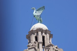 The Liver Bird looking over the Mersey