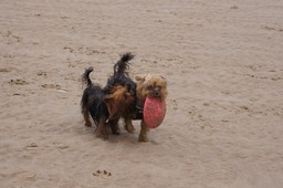 Magan & Maya (with Frisby) on Crosby Beach