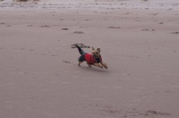 Freedom for Maya on Achnahaird Beach